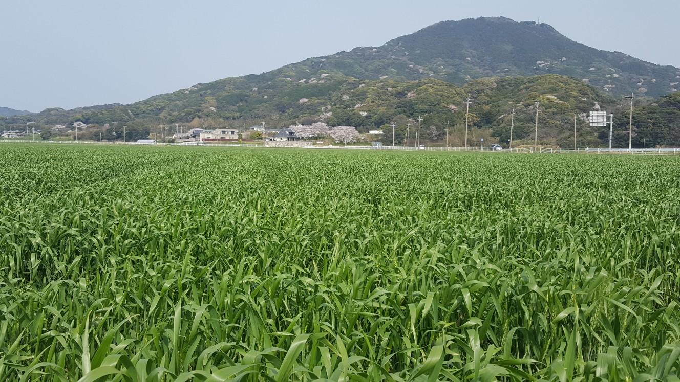 30.04.01. JA糸島(ラー麦)①